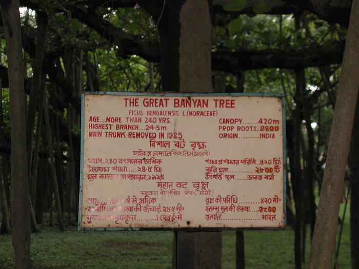 Facts about the largest banyan tree in the world.