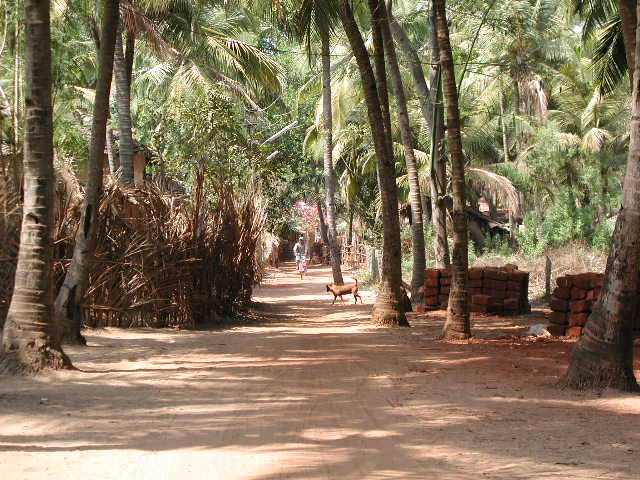 This is in Palolem now, in the far southern part of Goa. Just a picture of the lazy road on the way to some guesthouses.