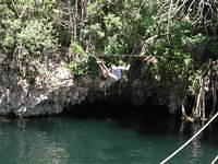 zip line into the cenote, banyan tree in behind!